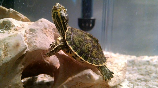 The Best Substrate for Turtles